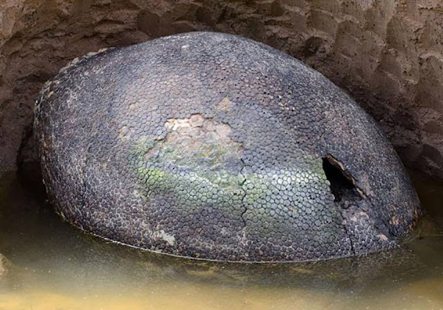 Argentinian Farmer Discovered A Gigantic Egg On His Land. What He Found Was Unbelievable!