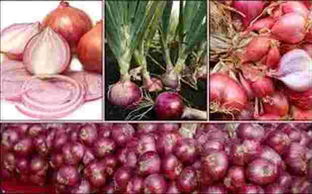 Jenis-jenis Tanaman Bawang Merah