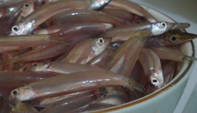 Wow..!! Ikan Teri Masuk Dalam Daftar 5 Makanan Pendongkrak Kecerdasan Otak
