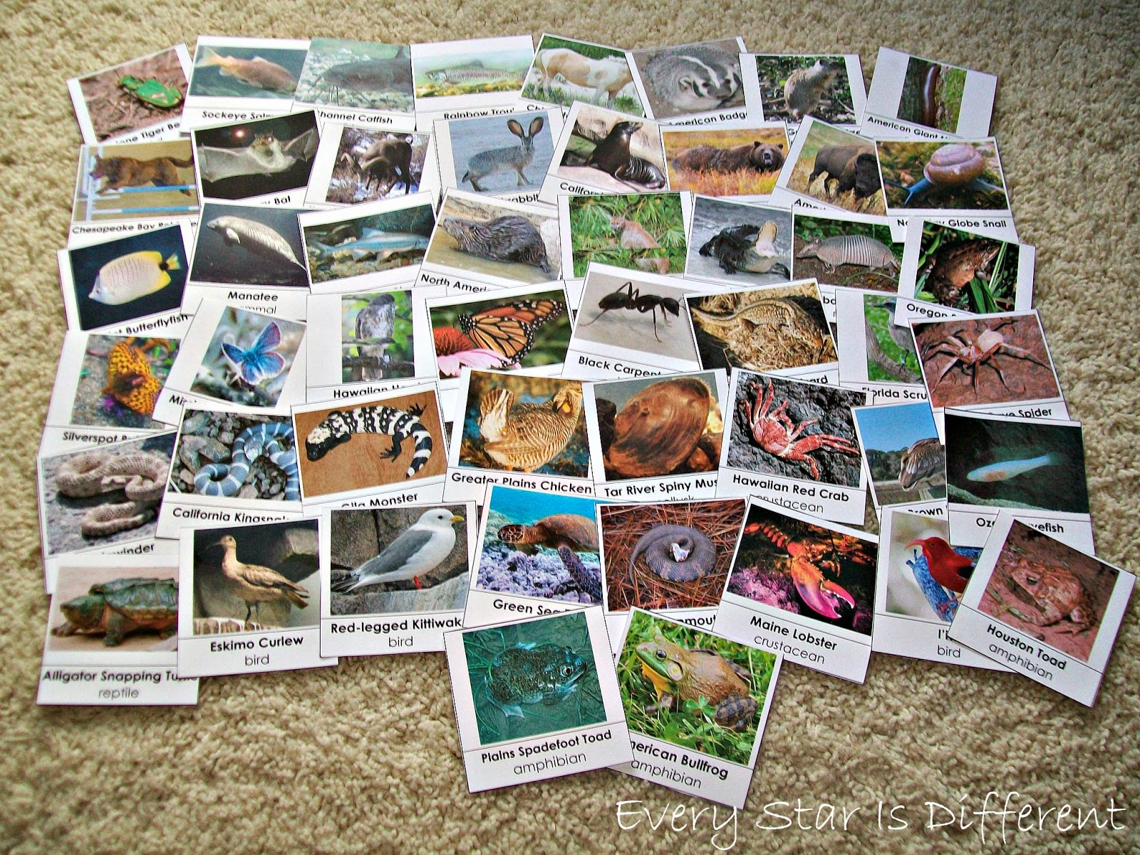 50 Animals from the United States of America Cards (Free Printable)