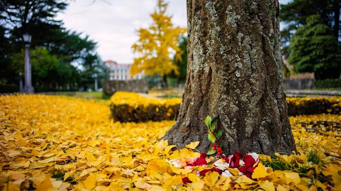 Wallpaper: Carpet of Autumn Leaves