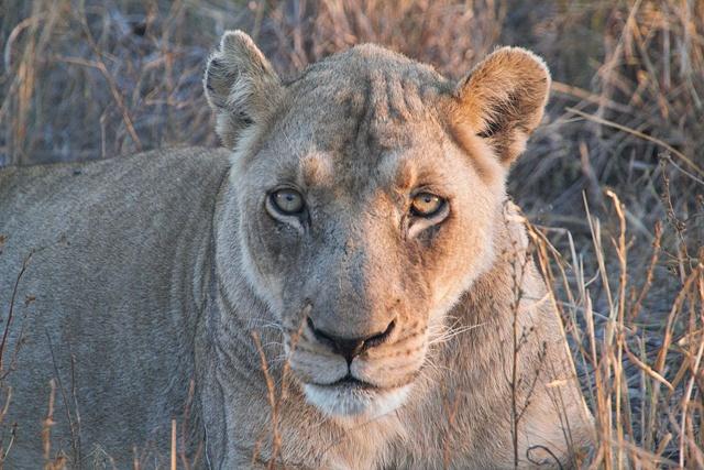 Suazilandia y Hlane National Park
