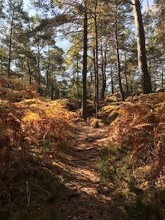 Sur les chemin de la forêt de Fontainebleau