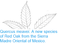 http://sciencythoughts.blogspot.co.uk/2016/08/quercus-meavei-new-species-of-red-oak.html