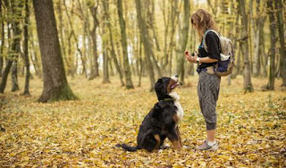 Dog Training Tips - Techniques in training your dog