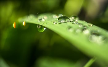 Wallpaper: Water drops on blade of grass