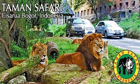 Tempat wisata taman safari bogor