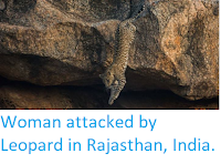 http://sciencythoughts.blogspot.co.uk/2018/04/woman-attacked-by-leopard-in-rajasthan.html