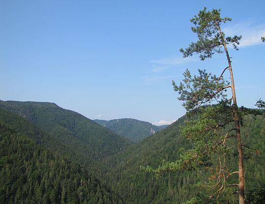 Widok na dolinę Tomášovská Belá.