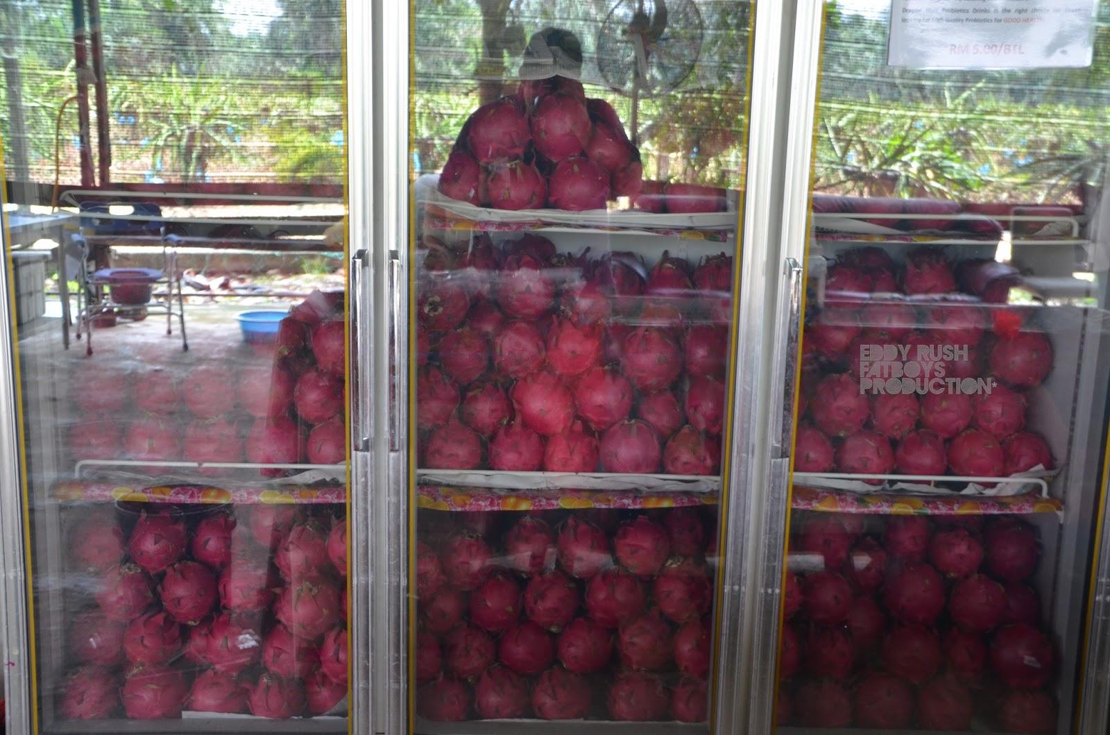Dragon fruit farm sepang golden unigen life sciences anavar oxandrolone