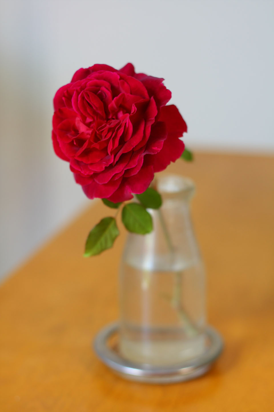The Most Fragrant Red Rose