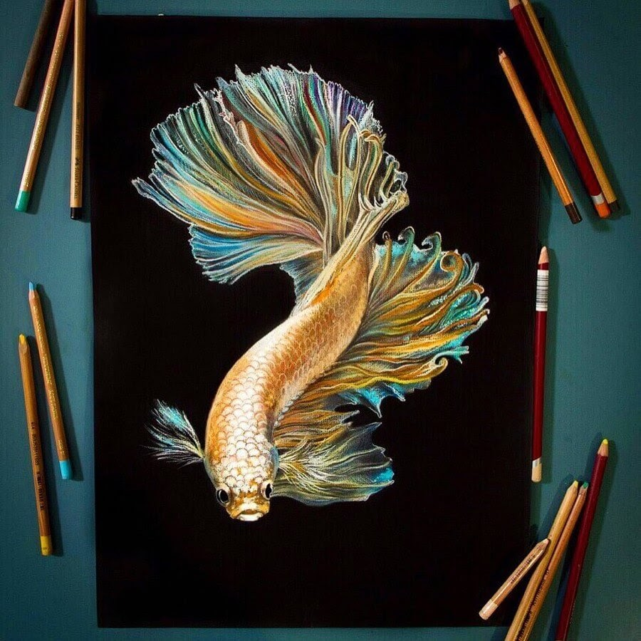 06-Siamese-fighting-fish-Anastasia-Gray-www-designstack-co