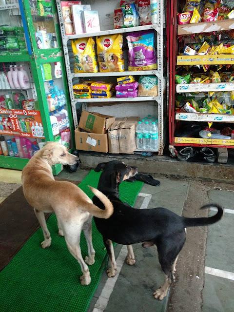 dogs, food, pet food, chemists, pharmacy, stock, mumbai, india, medicines, puzzle, Amasc