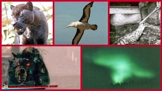 Lima Sosok Hewan ini Menjadi Lengeda yang Mengerikan