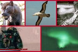 Lima Sosok Binatang Ini Menjadi Legenda Yang Mengerikan