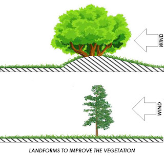 Landforms to Improve the Vegetation