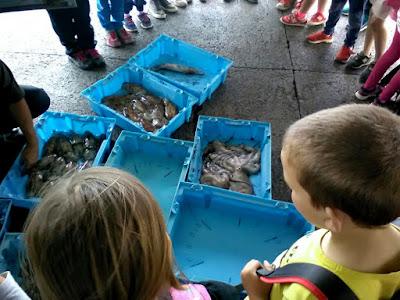 Visita escolar al Port d'Arenys-Sinera Cultura