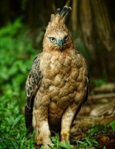 Gambar Hewan hewan Langka di indonesia  Kopiirengcom