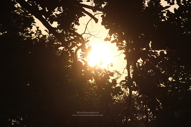 Sunrise At The Roaring Salvan County, Bandhavgarh