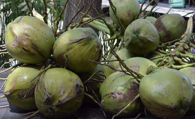 Зеленые кокосовые орехи в связке