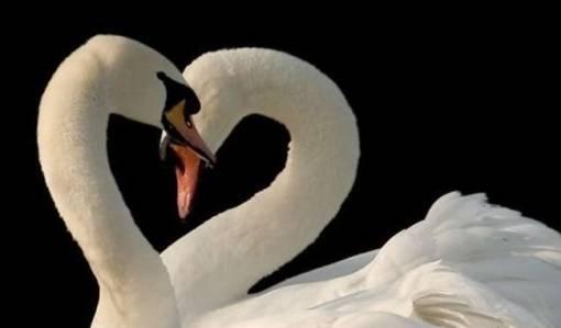 Biarkan Cinta Merajai Dunia