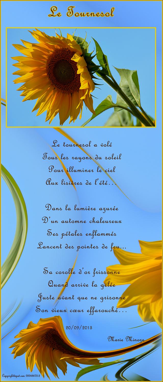 Au Pays Des Images Et Des Mots Poeme Le Tournesol