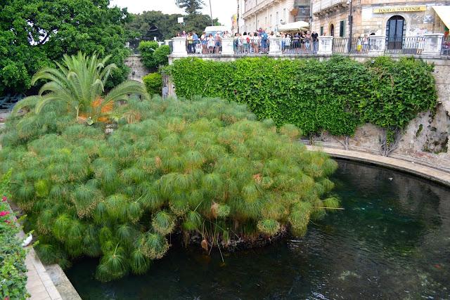 fuente aretusa  ortigia siracusa sicilia