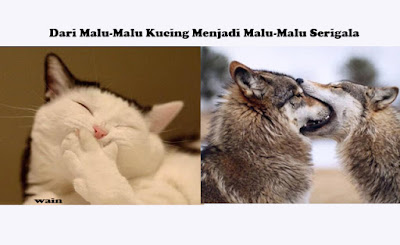 Dari Malu-Malu Kucing Menjadi Malu-Malu Serigala