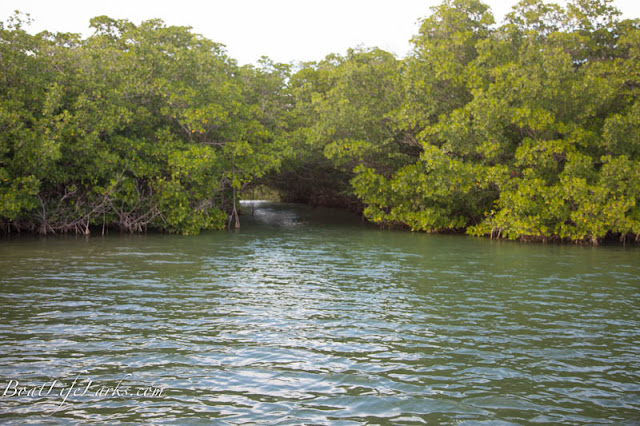 Mangrove tunnel, Dusenberry Creek, Key Largo