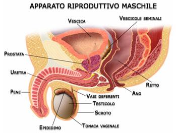 il tumore alla prostata che sintomi daily