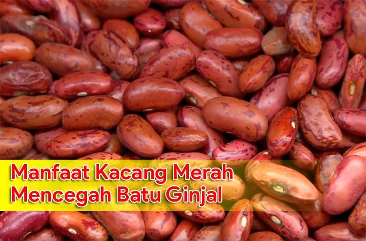 Manfaat Kacang Merah Untuk Mencegah Batu Ginjal