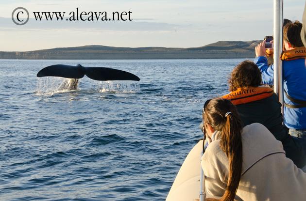 Fotografiando ballenas al atardecer en Puerto Pirámides