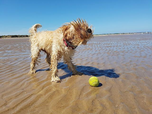 In spiaggia con Fido si può