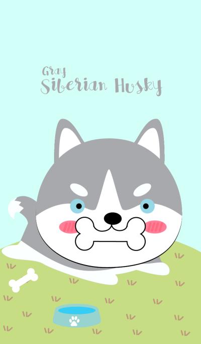 Cute Siberian Husky Dog (Gray)Theme