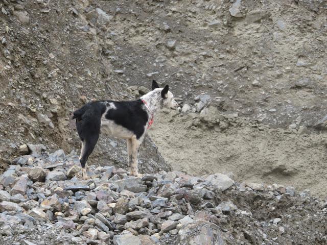 Schwere Verschüttungen entlang der Strecke. Was der Hund wohl denkt? die armen Menschen