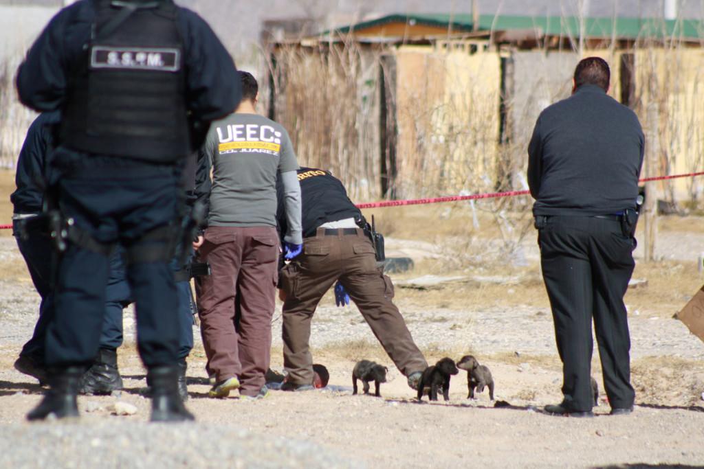 Fiscalía alista operativo con agentes estatales para bajar criminalidad en la Tarahumara