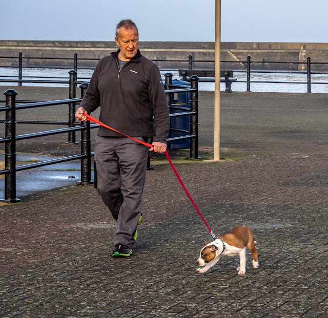 Photo of Ruby trotting along beside Phil