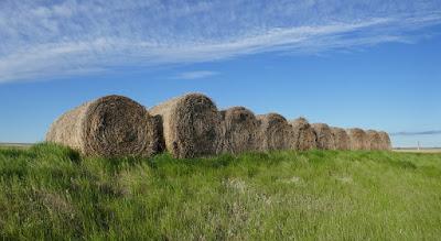 Schuler, Alberta, landscape, bales, farming