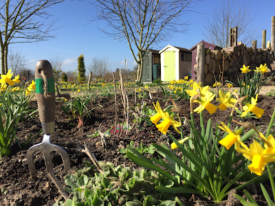 Trowel daffodils and brightly painted sheds