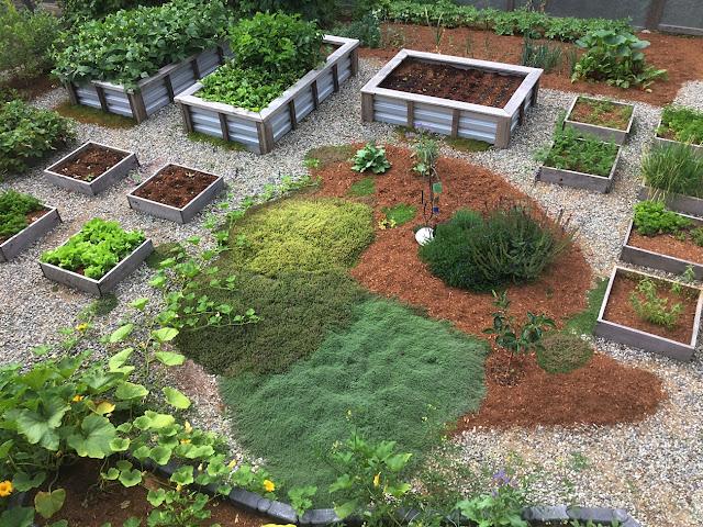 Organic urban food garden produces lots of food