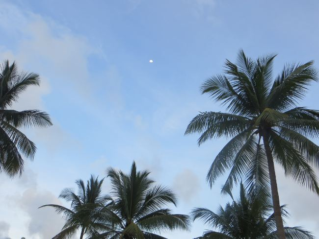 Пальмы и голубое небо