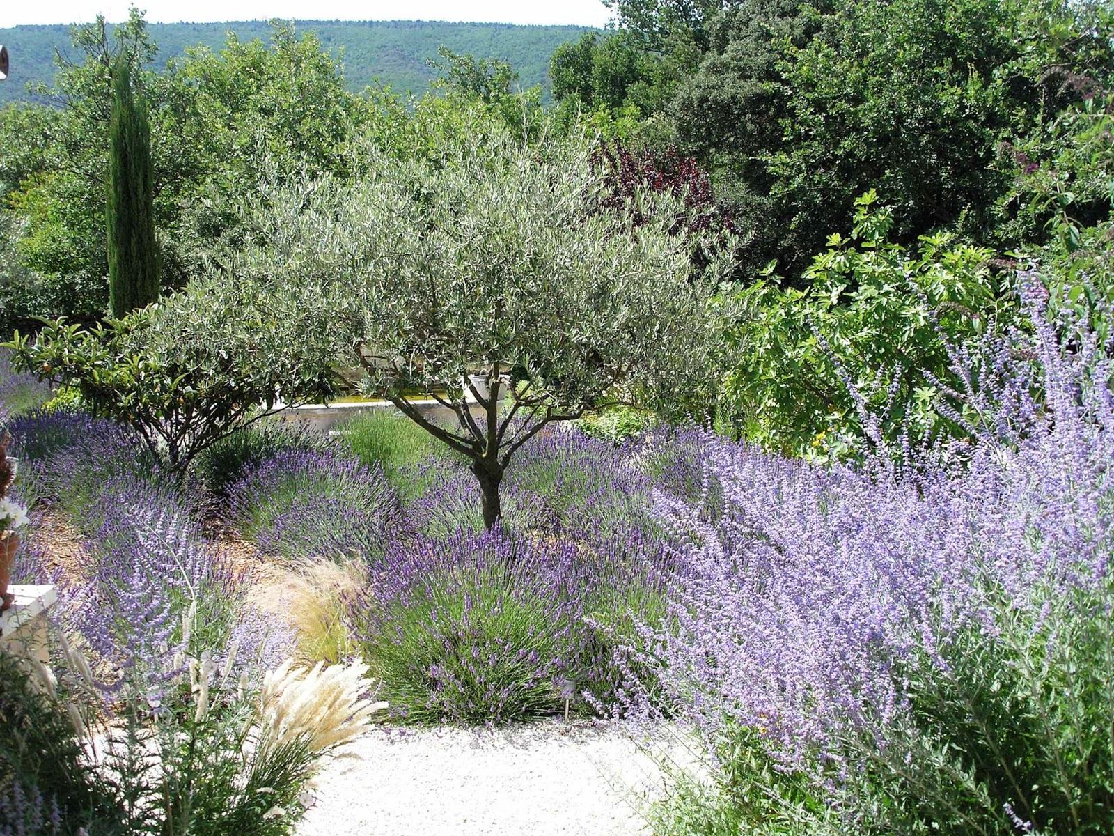 Promesse De Roses Jardins De Reve En Provence