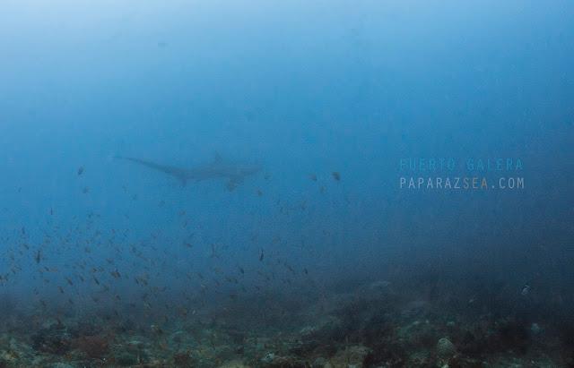 Scuba Diving Philippines, Underwater Photography Philippines, Dive Philippines, Where to Dive, Asia Divers, Asian Diver, DRT, Scuba diving Magazine,  EZ Dive, Marinelife, Scuba Diver Life, Scuba diving Blog, Paparazsea