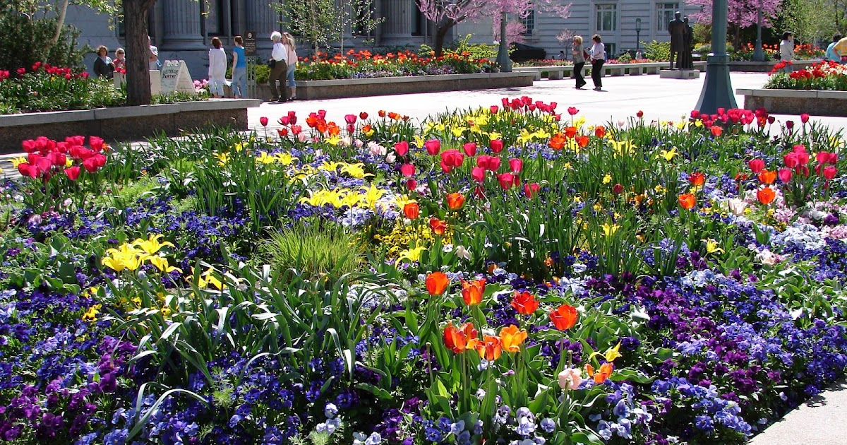 New Utah Gardener: Annuals For The Spring Garden In Utah - When Can ...