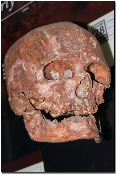 Il Regno: The Coming of the Cro-Magnon: Early Modern Man
