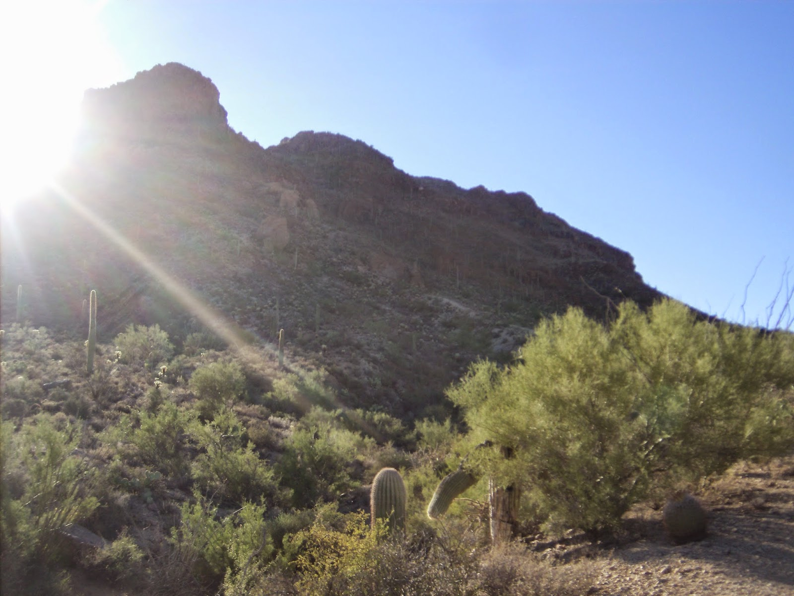 sunshine in tucson mountain park