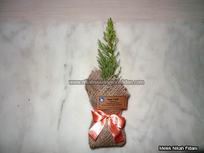 Duygu Doğa nikah bitkisi fidanı 3