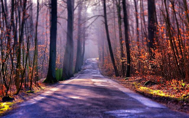 Herfstfoto met een weg door het bos en veel bomen
