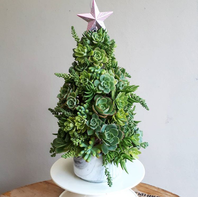 árvore de Natal com Suculentas