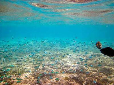 Paket Snorkleing Gili Nanggu